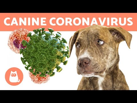CANINE CORONAVIRUS 🐶 Can It Be Treated?