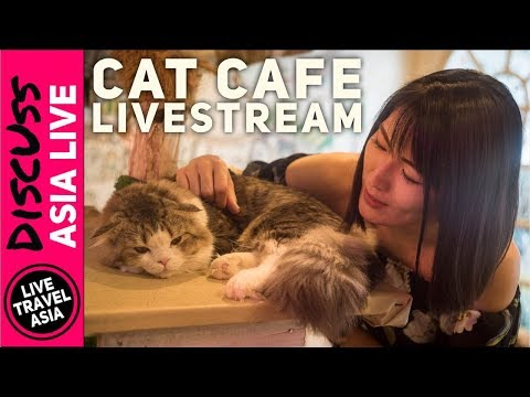 Ways to Live in Thailand, Bank Accounts, Phone Plans, Visas 4th of July Livestream