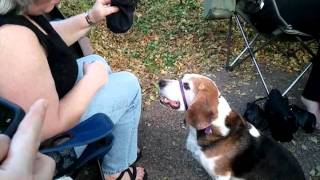 George W Beagle's Paw Bump