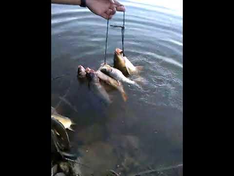 Bucak Balık Avı Yaklaşık 10 Kilo Balık Tuttuk