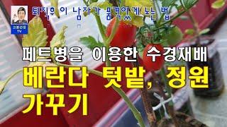 (고봉선생TV)페트병을 이용한 수경재배 - 베란다 텃밭…