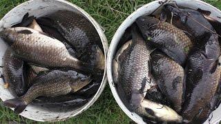 Рыбалка на карася руками -9 ведер за день. Наш супер улов!