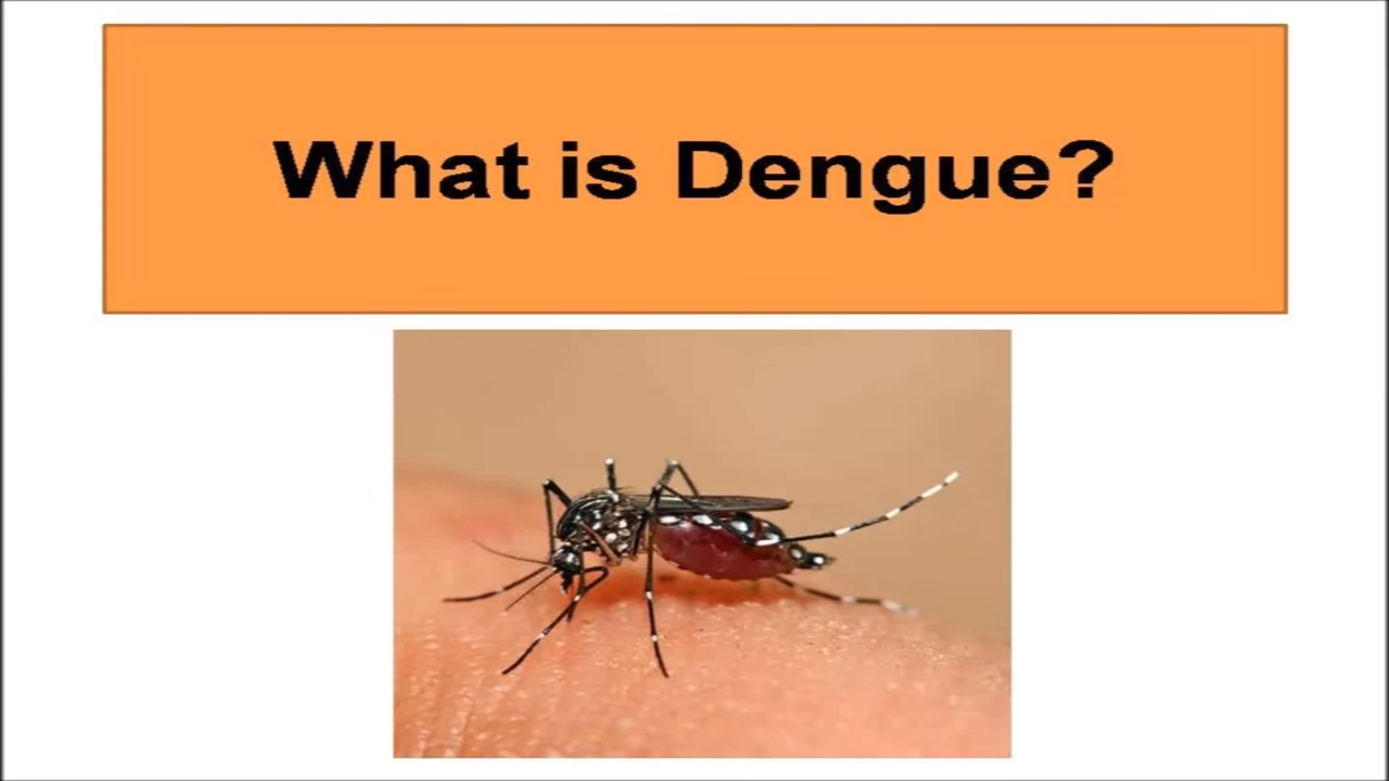 What Is Dengue? What are dengue fever symptoms and signs ...