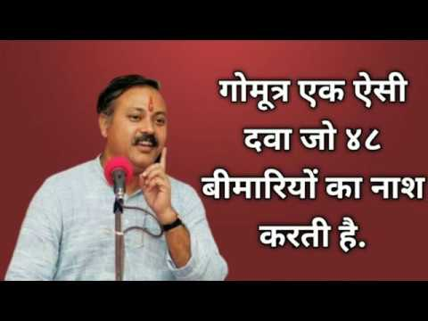 #gomutra #rajivdixit #cow #gomutra loss belly fat fast and easy tips|weight  loss tips and tricks