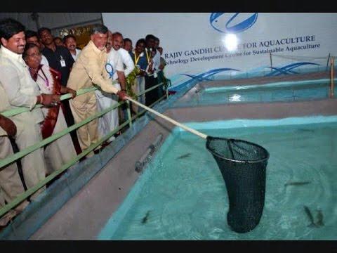 Fish Farming Growth Rise in Andhra Pradesh - Hybiz