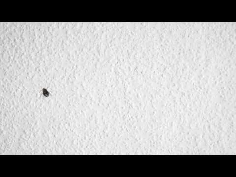 Migraine aura (fortification) – computer simulation