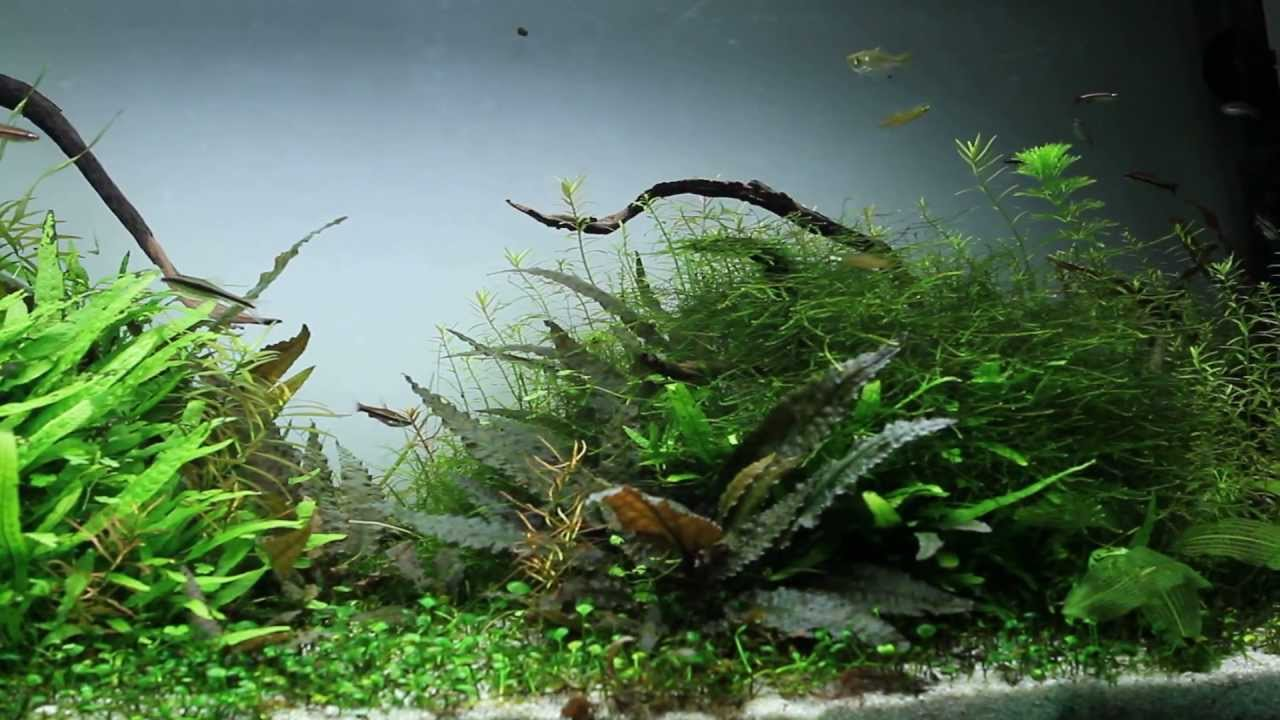 Aquascaping Planted Aquarium 120 Liter Youtube