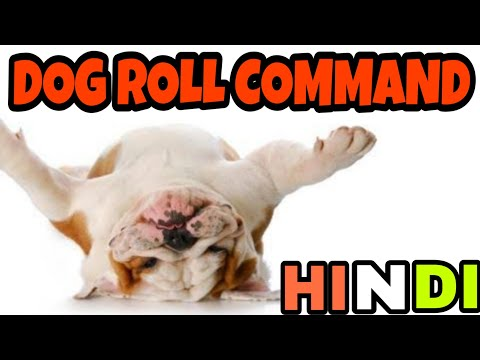 Teach Your Dog RoLL iN HINDI || dog training in hindi ||