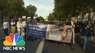 British Dog Owners March Against Brexit And Call For 'Wooferendum' | NBC News