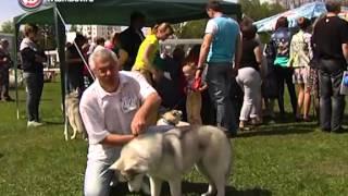 Тамбов принял Всероссийскую выставку собак /НВ - Тамбов/