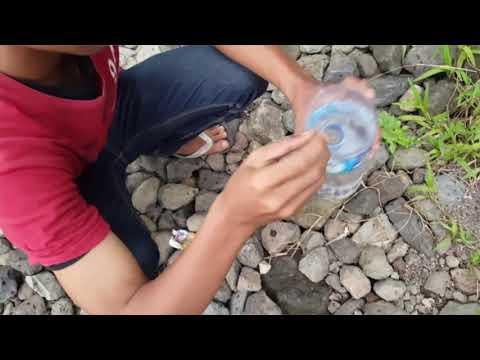 Cara mudah mencari udang sungai pakai botol bekas ... panen panennnn. Pas buat umpan mancing