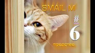 Если забыл кота покормить #6.Приколы про котов, кошек и собак.Кот делает сальто.Funny videos.