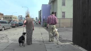 Dog Training In Buffalo Ny, K9 Connection First Lesson