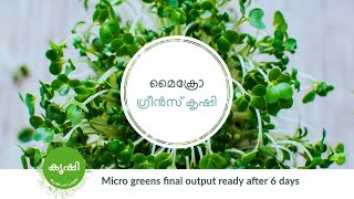 Micro greens final output ready after 6 days - Pro Nature Organic Moong Green Used