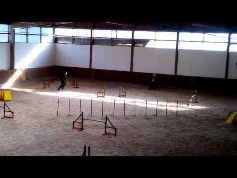02.11.2014 Andreas Lang mit Luzy Agility J3 in Hillsbach