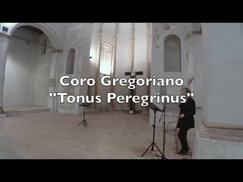 Concerto Tonus Peregrinus 2019 (part. 1)
