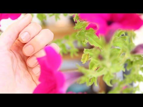Lütfen bu kutuyu genişletin! -Bu Videoda Kullandığım Ürünler- 1)Solingen Törpü 2)Sally Hansen Instant Cuticle Remover 3)Flormar Nourishing Oil With Vitamin ...