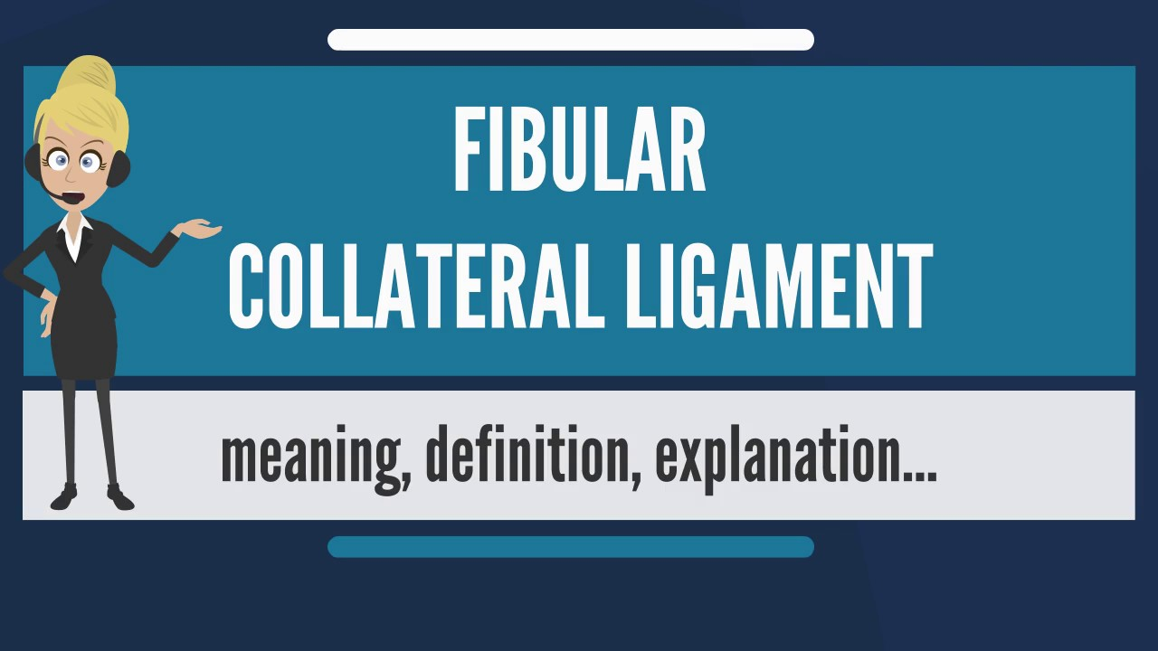 What Is Fibular Collateral Ligament What Does Fibular Collateral