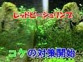 【アクアリウム】コケ発生! 対策を開始する!【bee shrimp】