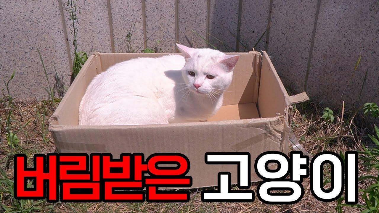 버림받아 밖에서 혼자사는 고양이 【학교종이 냥냥냥 Ep.03】