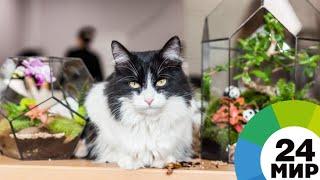 школьник из Кемерова изобрел ошейник, способный найти убежавшую кошку - МИР 24