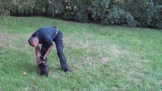 Guy Nashville Dog Trainer 082: Training A Puppy To Lay Down