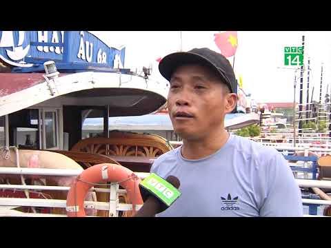 Quảng Ninh ứng phó với áp thấp nhiệt đới| VTC14