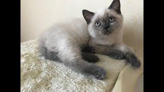Уход за котёнком // что нужно если решили завести кота