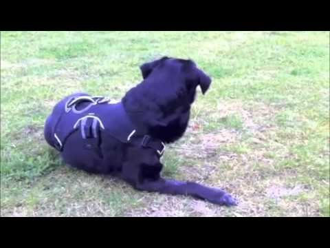 Story of dog Jip, from 4 to 3 legs (Part 1)