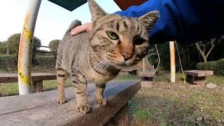 野良猫を公園のベンチでナデナデしてきた