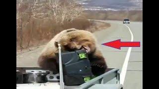 Медведь обокрал российских охотников на еду и убежал в лес