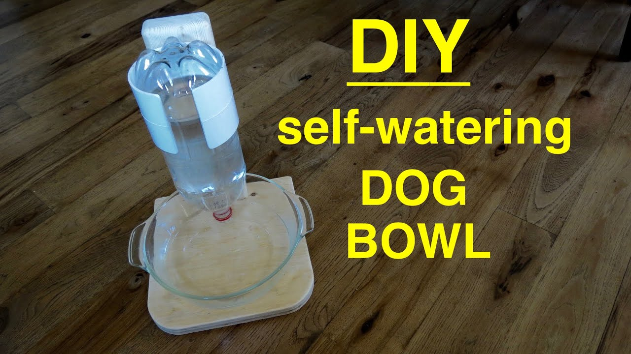 DIY  Self Filling Water Bowl Dispenser for Your DOG ( that works ! ) -  YouTube