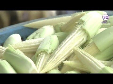 เกษตรสร้างชาติ : ปลูกข้าวโพดใช้น้ำน้อย กำไรดี | สำนักข่าวไทย อสมท