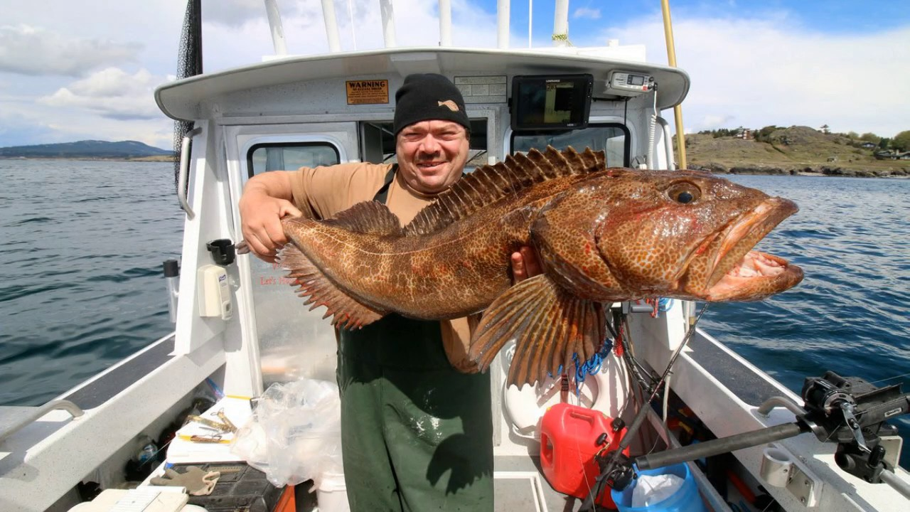 Puget sound wa lingcod adventure charters noaa youtube for Washington fishing license cost 2017