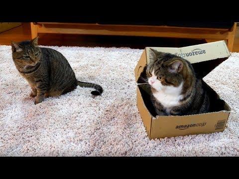 箱とまるとはな3。-Box and Maru&Hana 3.-