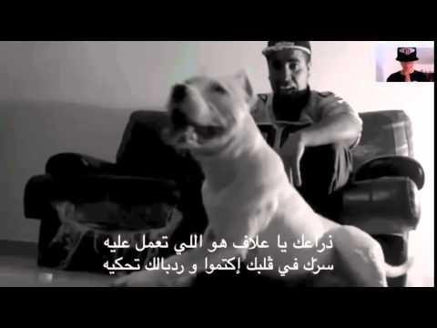 klay bbj كلـــــــــــــب   Paroles   by mokhtar HD   YouTube