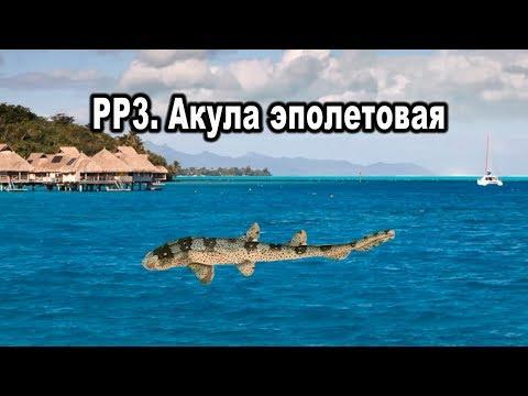"""Русская рыбалка 3. Акула эполетовая. (Квест """"Чертова дюжина"""")"""