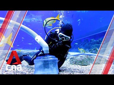 Behind the scenes: S.E.A. Aquarium during Singapore's circuit breaker