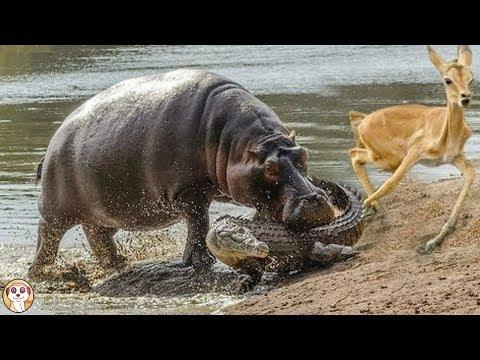 10 MORSI PIÙ POTENTI DEL REGNO ANIMALE
