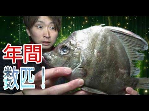 1年で数匹の水揚げ!?幻の魚『カワビシャ』さばいてみた!