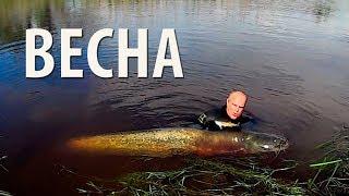 Охота на уток. Весна и осень 2015 г. Покровск.