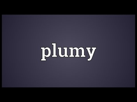 Header of plumy