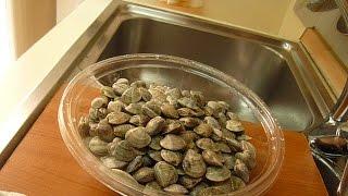 Как Готовить Морские Ракушки How to cook Seafood Cockleshells