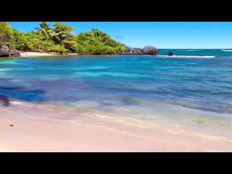 Tropical House Radio • 24/7 Live Radio   Best NCS ♫ DUBSTEP, TRAP, EDM
