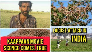 KAAPPAAN movie scence comes TRUE | Locust attack in India | Tamil