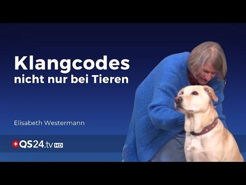 Wirken Klangcodes nicht nur bei Tieren?   Sinn des Lebens   QS24 Gesundheitsfernsehen