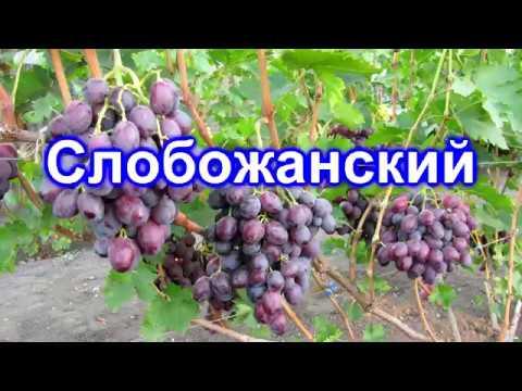 Слобожанский 17.09.2018