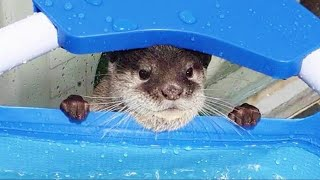 Otter family's house has been upgraded.