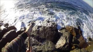 7lb Calico Bass Mission Beach