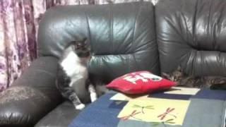 いい年した大人ネコが新米のガキネコ振り回されています。 n.